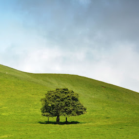 Alone by Beth Bowman - Landscapes Prairies, Meadows & Fields (  )