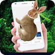 Rabbit in Phone Cute Joke