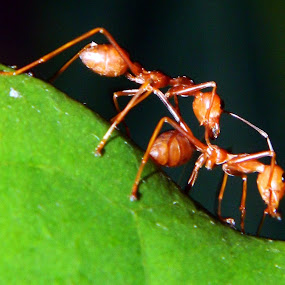 Friendship by Sudhindu bikash Mandal - Animals Insects & Spiders