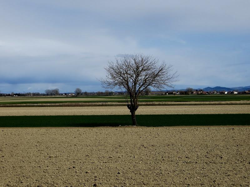 solitudine dell'albero di mariellaturlon