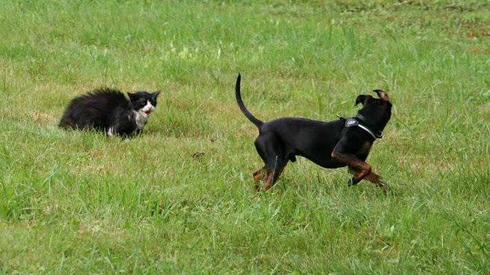 Come cane e gatto...