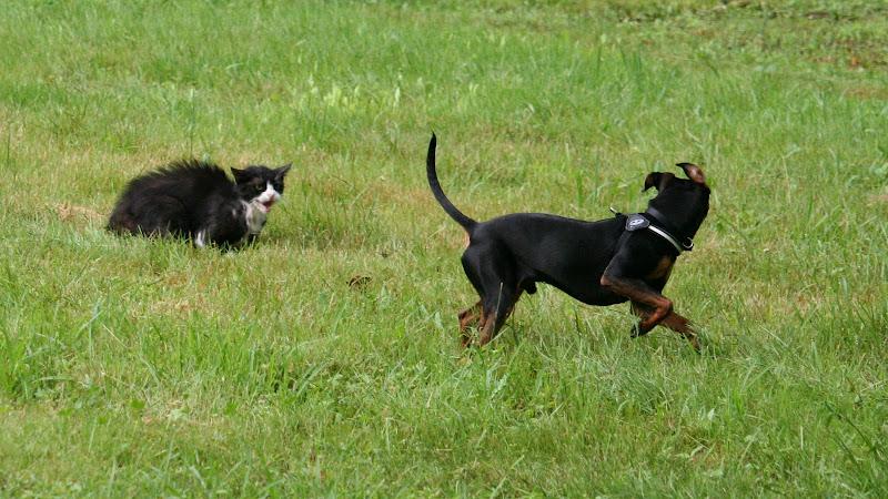 Come cane e gatto... di fotorobi
