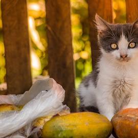 Kitten Garden by Matija Krog - Animals - Cats Kittens ( fur, kitten, kawaii, cat, cute, eyes )