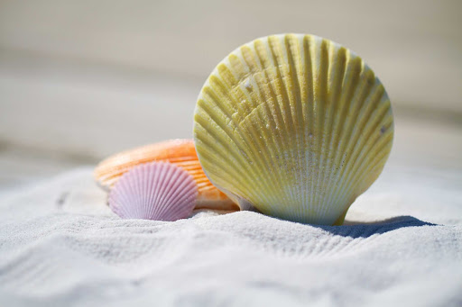 Colorful seashells spotted on the beach.
