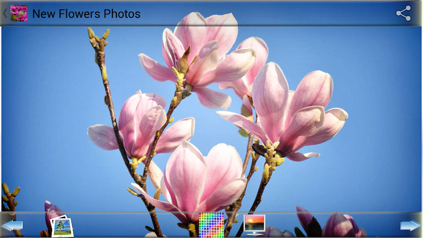 android New Flowers Photos Screenshot 3