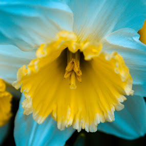 Blue flower by Seth Brown - Nature Up Close Flowers - 2011-2013 ( blue, yellow, marco, flower, close )