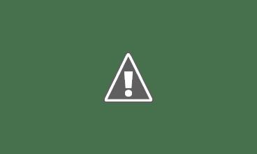 Photo: One lark takes off