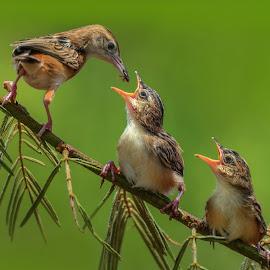 by Leovin Agustim - Animals Birds (  )