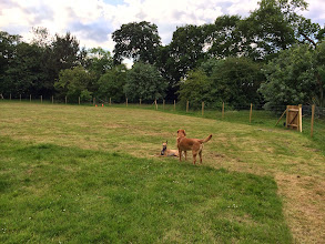 Photo: Annabel Whippet and Stan Lab