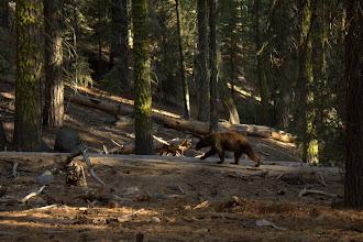Photo: Momma bear