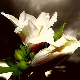 In garden by Nat Bolfan-Stosic - Uncategorized All Uncategorized ( village, beauty, storm, flowers, garden )