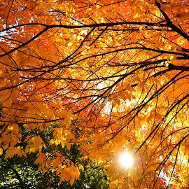 by Tony Lobato - Nature Up Close Trees & Bushes (  )