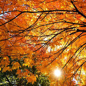 by Antonio Lobato - Nature Up Close Trees & Bushes (  )