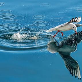 by Siniša Biljan - Animals Birds