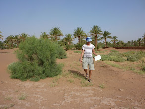 Photo: Richard of Sahara Roots counts the trees that have survived the first 2 years