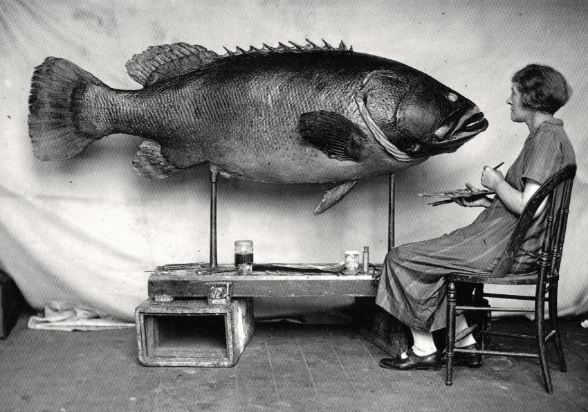 obraz ryba