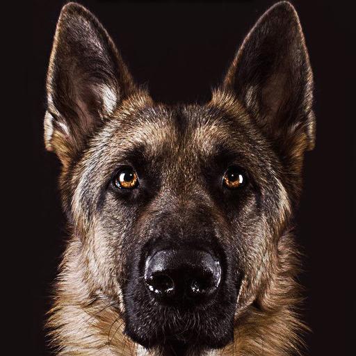 German Shepherd Wallpaper Aplicaciones En Google Play