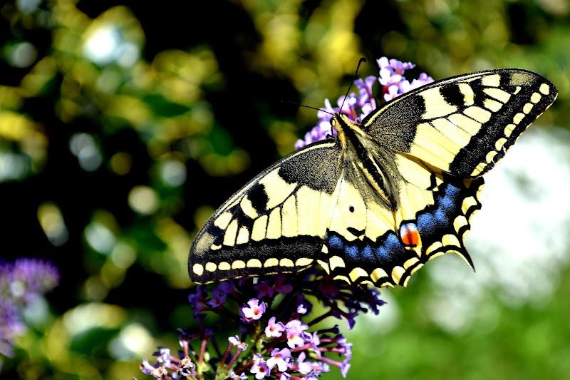 Farfalla di tati93