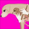 chien chirurgie grossesse 2