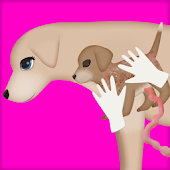 Dog Pregnancy Surgery 2