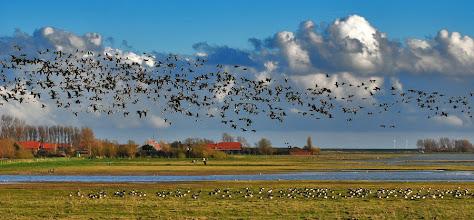 Photo: Op de vlucht...