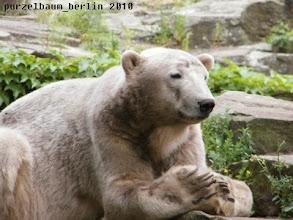 Photo: Ein frisch eingefaerbter Knut ;-)