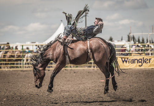 Bare Back Riding at Strathmore Stampede by David Kotsibie - Sports & Fitness Rodeo/Bull Riding ( cowboy, cowboys, horse, action, rodeo, bareback, competition, animal, stampede )