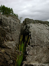 Photo: Grass in the rocks, Tofino