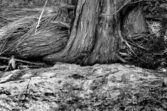 Photo: Root and Rock