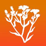 Bachblüten für Kinder PRO | Homöopathische Helfer Icon