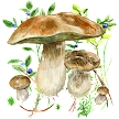 Mushrooms app APK