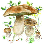Mushrooms app 30 (Ad Free)