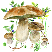 Mushrooms app
