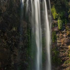 Queen Mary Falls by Deborah Bisley - Landscapes Waterscapes ( water spray, water, falling water, cliff, waterfall, trees, rocks,  )