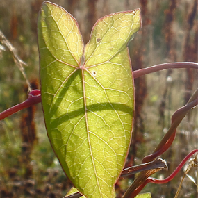 by Torill Michelsen - Nature Up Close Leaves & Grasses