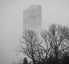 Photo: Fog on Willingdon Ave South, Burnaby, BC
