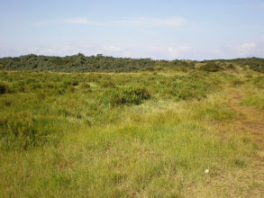 Photo: Norfolk Coast Path - From Holme to Brancaster - Holme Dunes