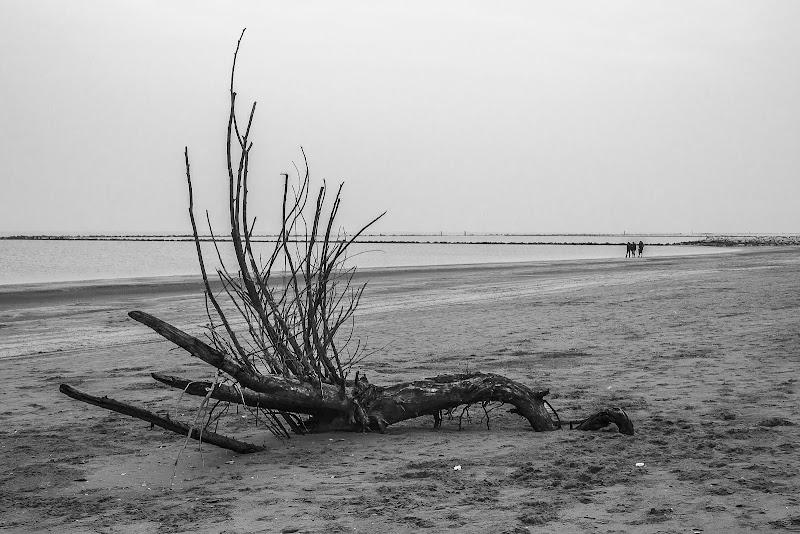 il mare d'inverno di massimo bertozzi