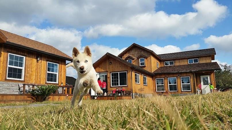 Budowa budy dla psa - to musisz wiedzieć!