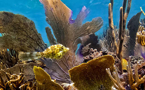 fish_in_corals_Culebra_Puerto_Rico.jpg - Tropical fish in a coral reef on Culebra Island in Puerto Rico.