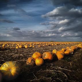 Halloween by Pavel Zach - Instagram & Mobile Android ( clouds, field, orange, pumpkin, halloween,  )