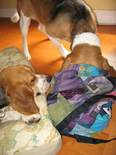 Photo: Maddie inspecting my canine massage bag after her massage.