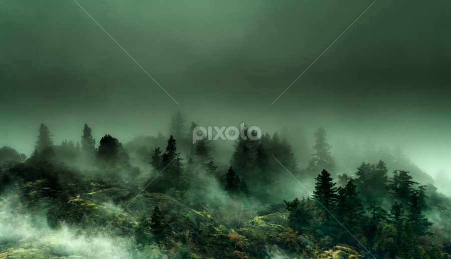 Mountain Fog by Shaun Groenesteyn - Landscapes Mountains & Hills ( clouds, mountain, nature, fog, mood, weather, trees, night, mist )