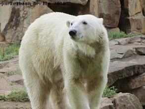 Photo: Ein rundum zufriedener Knut :-)