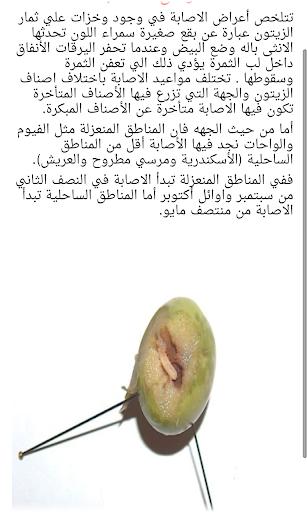 Olives 2 1.0 screenshots 7