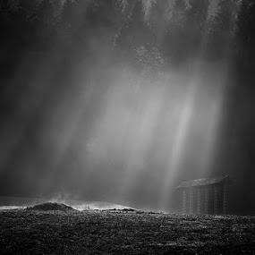 Awakening by Rafael Kos - Landscapes Forests ( rays, black&white )