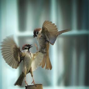 Uuppss,... by Irawan Sudjana - Animals Birds