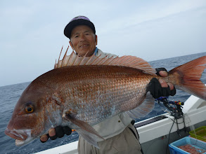 Photo: どどーん! ジャンボ真鯛!しかもベッピンさん! 5kg近いメスの真鯛でしたー。