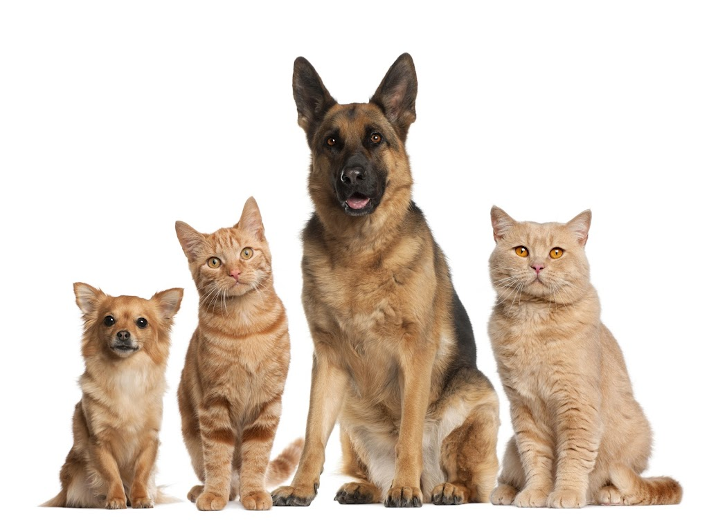 Hund_Kat