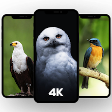 com.reemo.birdwallpapers Download on Windows